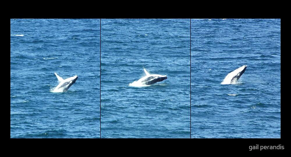 whales at caba ... by gail woodbury