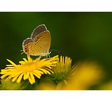 wild flower Photographic Print
