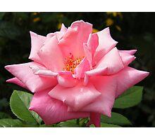 Flower Close-Up, New York Botanical Garden, Bronx, New York Photographic Print