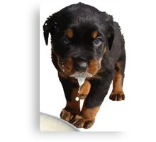 Cute Rottweiler Puppy Lapping Milk Vector Canvas Print