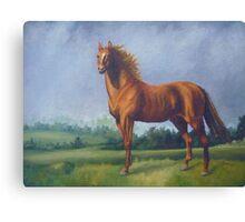 Man O'War Racehorse Canvas Print