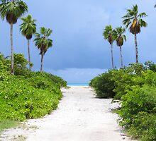Sand path. by Anne Scantlebury