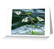 ** DOGWOOD BLOOMING OVER THE MERCED RIVER ** Greeting Card