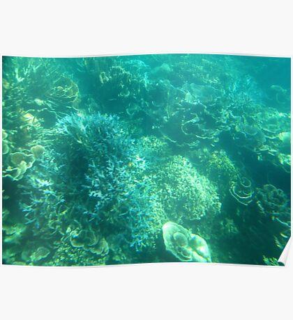 Ningaloo Reef Poster