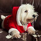 S-Santa? by Paul-M-W