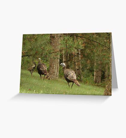 Holy Hill Turkeys Greeting Card