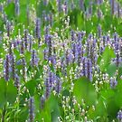 Violet-blue And White by lorilee