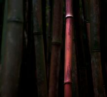 Rose Pink Bamboo by Shannon Kerr