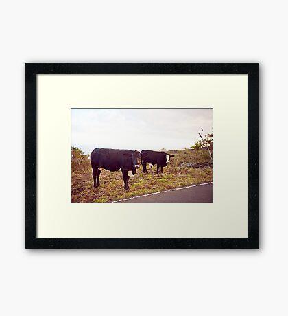 Cows! Framed Print