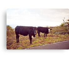 Cows! Canvas Print