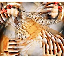 Designs Inspired By Nature: Wild Partridge Photographic Print