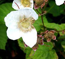 White Flowers in bloom by Kelly Walker