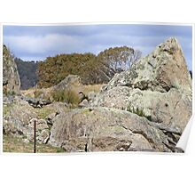 Triangular Granite rock in a paddock Poster