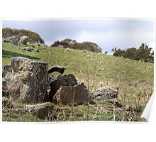 Mossy Granite Rocks Poster
