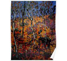 Barryrennie Forest Gulley Poster