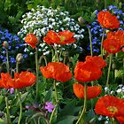 Poppy Klatschmohn Bed Park Flower Bed by justforyou