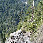Lonely tree on Mount Rainier by Kelly Walker