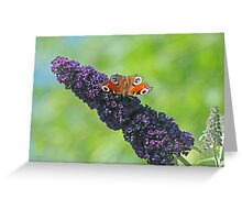 Peacock Butterfly on Budleia Greeting Card