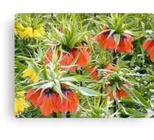 Imperial Crown Flower Yellow Orange Canvas Print