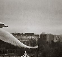 In flight... by Louise LeGresley