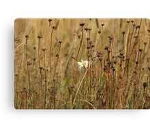 white flower on a yellow field Canvas Print