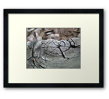 Growth Rings Framed Print