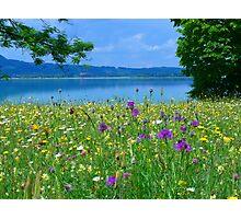 Meadow Flowers Bloom Colorful Flockenblumen Photographic Print