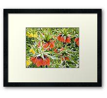 Imperial Crown Flower Yellow Orange Framed Print