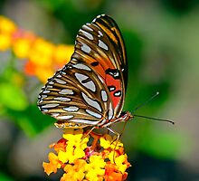 A Beautiful Day in The Park (Gulf Fritillary Butterfly) by imagetj
