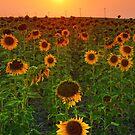 The Romance Of A Summer Dusk by John  De Bord Photography