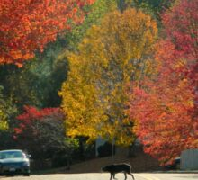 Fall Walk in my Neighborhood-Virginia     ^ Sticker
