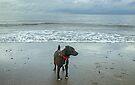 The Irish Sea Dog by VoluntaryRanger