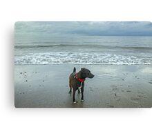 The Irish Sea Dog Canvas Print