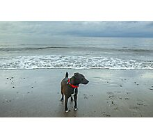 The Irish Sea Dog Photographic Print