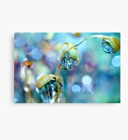 Rainbow Moss Drops Canvas Print