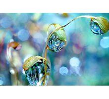 Rainbow Moss Drops Photographic Print