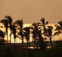 Sunset Palm Trees Sea Atmosphere by justforyou