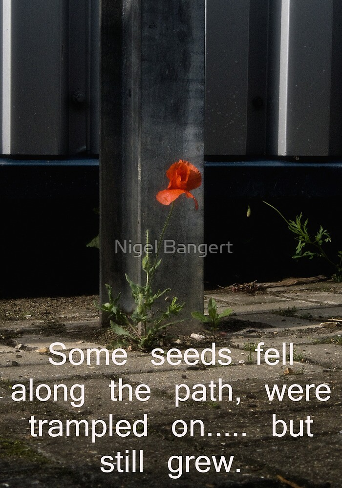 Some Seeds by Nigel Bangert