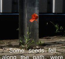 Some Seeds by Nigel Bangert