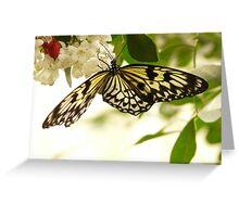 White Baumnymphe Butterfly Idea Leuconoe Greeting Card