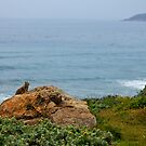 Pacific Coast Nature by Kathy Nairn