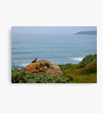 Pacific Coast Nature Canvas Print