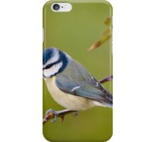 Blue tit, perched on rose branch iPhone Case/Skin