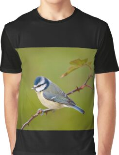 Blue tit, perched on rose branch Graphic T-Shirt