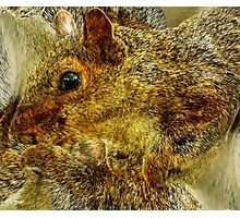 Designs Inspired By Nature: Grey Squirrel Photographic Print