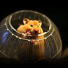 Hello Twinkie by AngieBanta