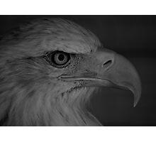 Eagle Eyes Photographic Print