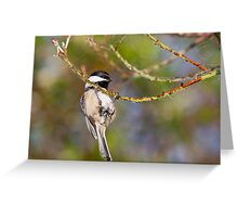 Hanging Around - Black-capped Chickadee Greeting Card