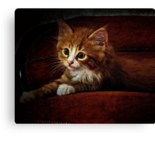 Kitten on the couch Canvas Print