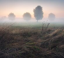Trees in Morning Mist on Meadow at Sunrise  by Stanislav Salamanov